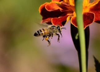 Anafilaxia por picada de abeja