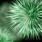 ¿Qué son los hematíes? – Términos importantes de nuestro organismo
