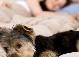 compartir lugar con el perro