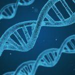 Genes de la obesidad