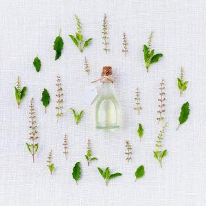 diferentes plantas aromaticas
