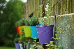 plantas en potes