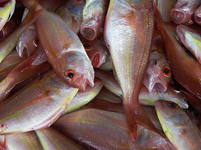 Ciguatera, intoxicación por pescado contaminado