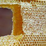 Las bondades de la cera de abejas