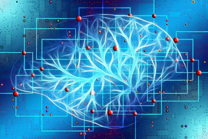El cerebro es el causante de nuestras sensaciones durante el enamoramiento