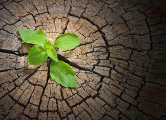La resiliencia ante las dificultades