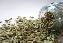 Hinojo como planta medicinal altamente recomendada