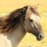 Los caballos pueden mejorar la calidad de vida de quien padece esclerosis múltiple