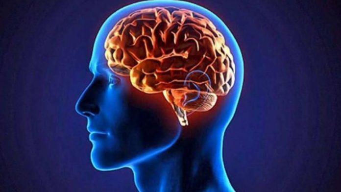 Las neuronas continúan creciendo
