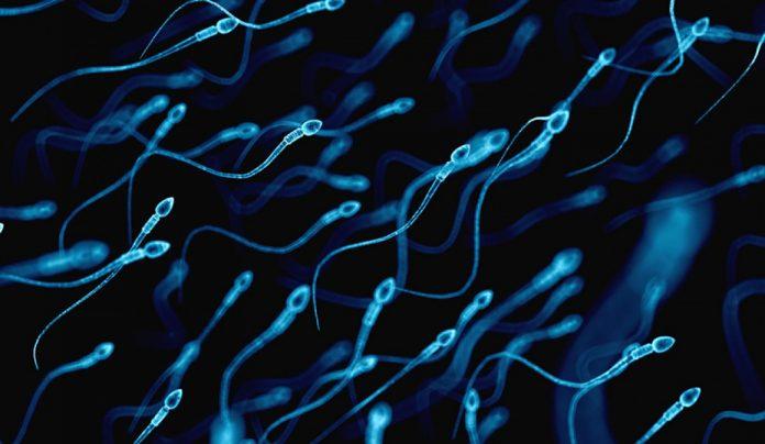 Formas naturales de acrecentar la producción de espermatozoides
