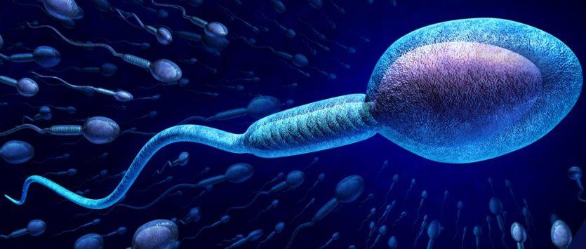 Elevar el conteo de espermatozoides con formas naturales