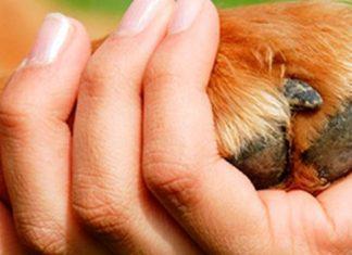 Acupuntura para mascotas