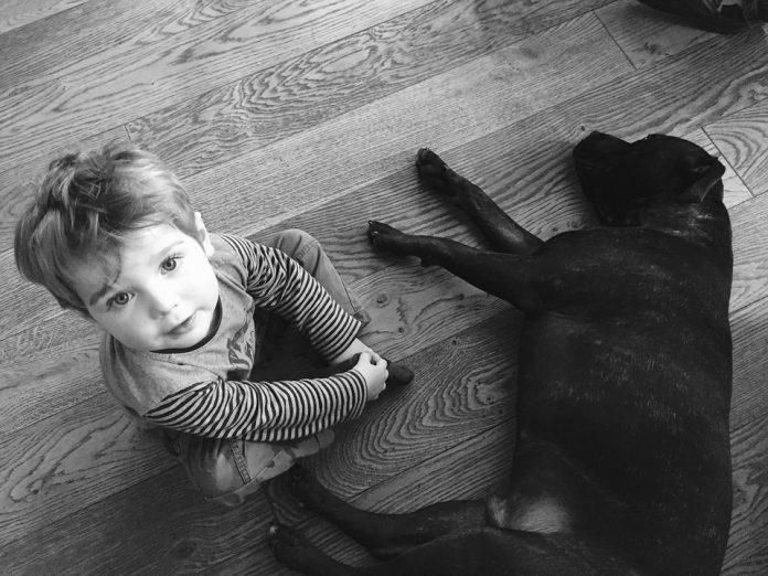 Cachorros y bebés