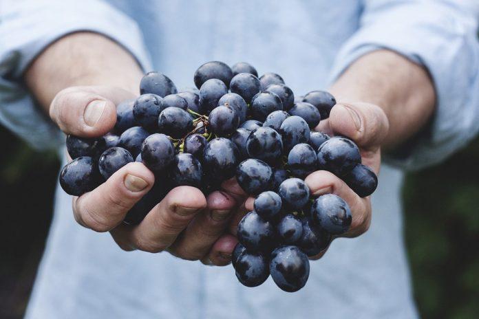 la uva para el cerebro