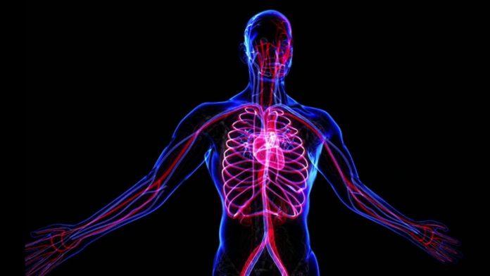 El sistema nervioso y los problemas de erección