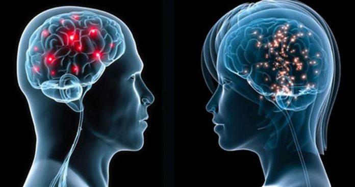 El cerebro femenino vs masculino
