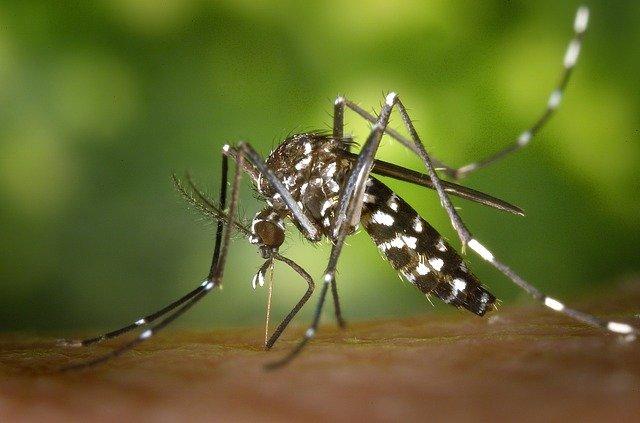 Chikungunya en España