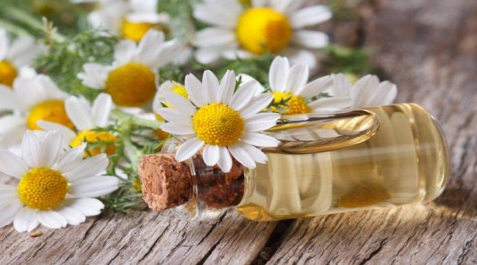 Plantas medicinales que te ayudaran a aliviar el estrés