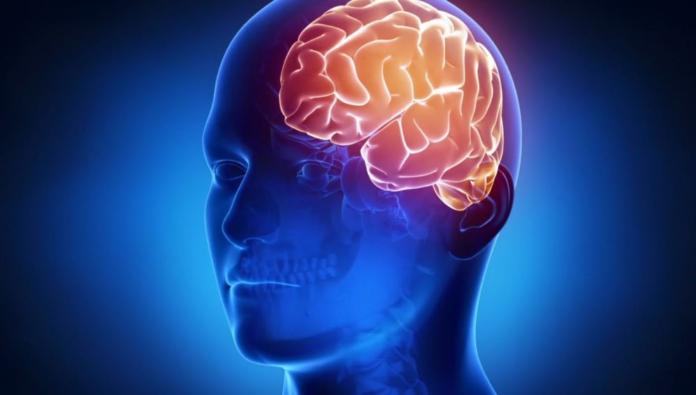 curiosidades sobre el cerebro