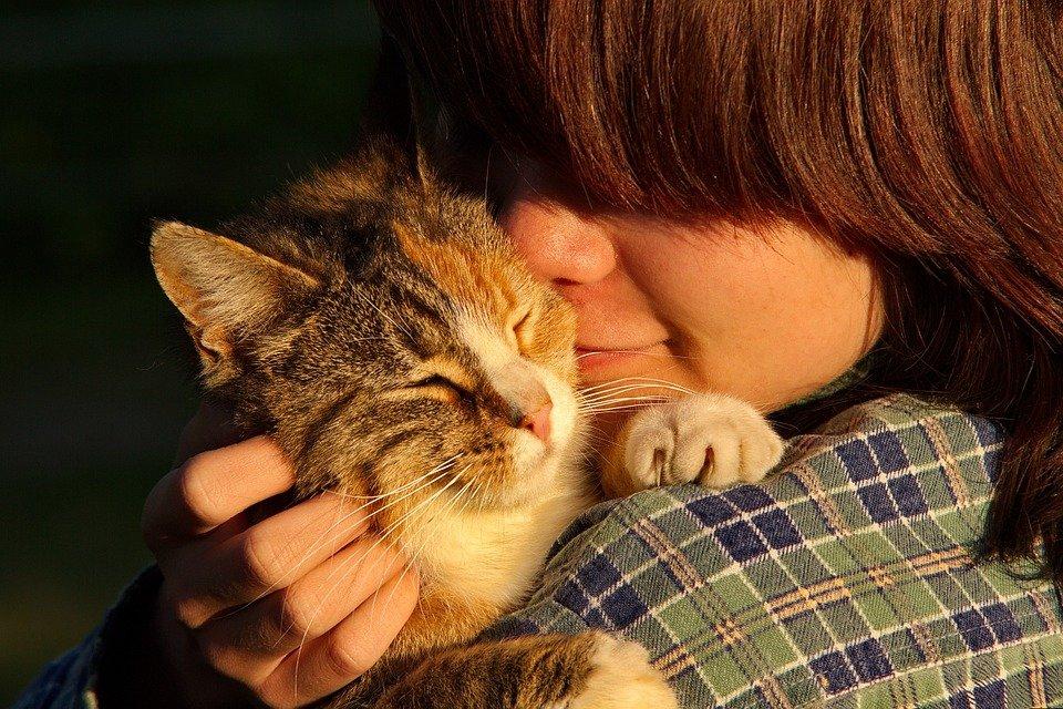 mascotas de soporte emocional